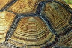 Gigantyczny Afrykański Tortoise skorupy wzór Fotografia Stock