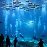 Gigantyczny akwarium Fotografia Royalty Free