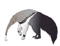 Gigantyczny Anteater jest przyglądający dla niektóre mrówek Fotografia Stock