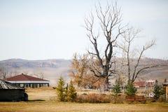 Gigantyczny antyczny drzewo więdnący i czarny w środku jesień krajobraz tajemnica Obrazy Stock