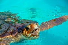 gigantyczny denny żółw Zdjęcie Royalty Free