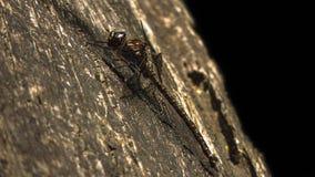 Gigantyczny Dragonfly Zdjęcia Stock