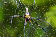 Gigantyczny drewniany pająk Obraz Stock