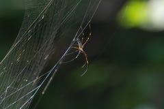 Gigantyczny drewniany pająk na sieci Zdjęcia Stock