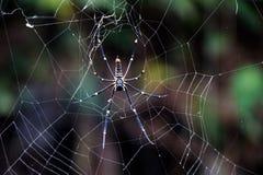 Gigantyczny Drewniany pająk Nephila Pilipes Zdjęcia Royalty Free