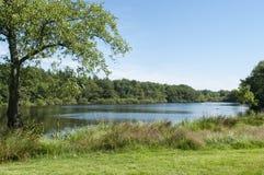 Gigantyczny jezioro w lecie z niebieskim niebem i lasem fotografia royalty free