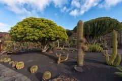 Gigantyczny kaktusa ogród zdjęcia royalty free