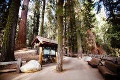 Gigantyczny Lasowy sekwoja park narodowy Zdjęcia Stock