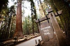 Gigantyczny Lasowy sekwoja park narodowy Obraz Stock