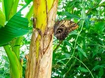 Gigantyczny motyl w naturalnym parku obrazy royalty free