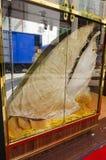 Gigantyczny rekinu żebro obrazy stock