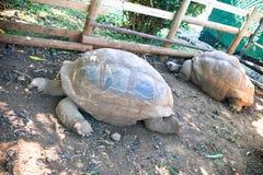 Gigantyczny tortoise Zdjęcie Royalty Free