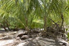 Gigantyczny tortoise w dżungli Obrazy Stock