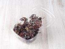 Gigartina Pistillata. Edible red seaweed in the family Gigartina. Binomial name: Gigartina Pistillata. Salted for conservation stock photo