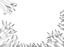 Gigli bianchi su fondo bianco Fotografia Stock Libera da Diritti