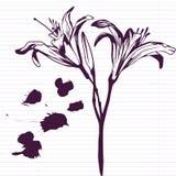 Gigli del disegno dell'inchiostro illustrazione di stock