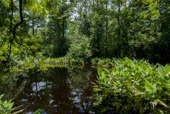 Gigli e piante acquatiche dei terreni paludosi di Florida fotografie stock