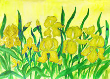 Gigli gialli Immagine Stock Libera da Diritti