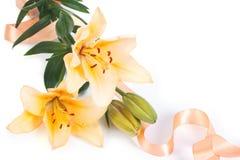 Gigli gialli con il nastro Fotografie Stock