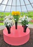 Gigli gialli e bianchi in vaso Immagini Stock