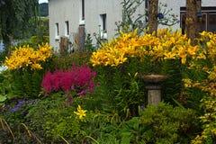 Gigli gialli nel giardino Immagini Stock Libere da Diritti