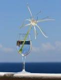 Giglio bianco elegante del ragno in vetro di vino Immagini Stock Libere da Diritti
