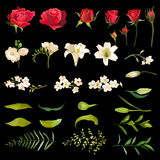 Giglio d'annata e Rose Flowers Set nello stile dell'acquerello royalty illustrazione gratis