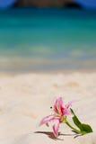 Giglio della spiaggia Fotografia Stock Libera da Diritti