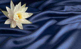 Giglio di acqua su raso blu Immagini Stock Libere da Diritti