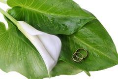 Giglio di Calla ed anelli di cerimonia nuziale Fotografia Stock Libera da Diritti