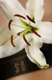 Giglio di pasqua sulla bibbia Fotografia Stock Libera da Diritti