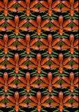 Giglio e germogli arancio su un fondo senza cuciture nero Fotografia Stock