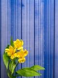 Giglio peruviano giallo con lo spazio della copia Immagine Stock