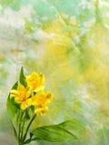 Giglio peruviano giallo con lo spazio della copia Fotografia Stock Libera da Diritti