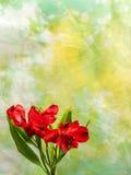 Giglio peruviano rosso sul fondo verde/giallo Fotografie Stock Libere da Diritti