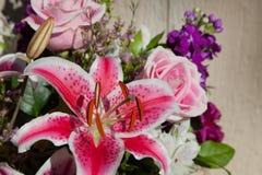 Giglio rosa e bianco Immagine Stock