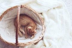 Gigner小猫 库存照片