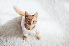 Gigner-Kätzchen Lizenzfreies Stockbild