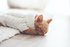 Gigner-Kätzchen Lizenzfreie Stockfotografie