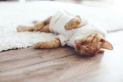 Gigner-Kätzchen Stockbild