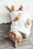 Gigner-Kätzchen Lizenzfreie Stockfotos