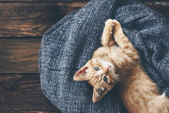 Gigner kattunge Royaltyfri Bild