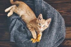 Gigner kattunge Royaltyfri Foto