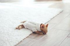 Gigner kattunge Fotografering för Bildbyråer