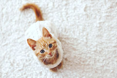 Gigner kattunge Arkivbild