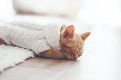 Gigner kattunge Royaltyfri Fotografi