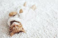 Gigner kattunge Arkivfoto