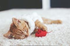 Gigner kattunge Arkivbilder
