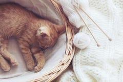 Gigner kattunge Royaltyfria Foton