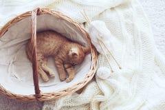 Gigner kitten stock photo